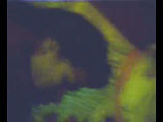 Zorrica monica tello prepa rio verde slp vidéo