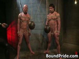 fresh gay hq, gagged fresh, online bound all